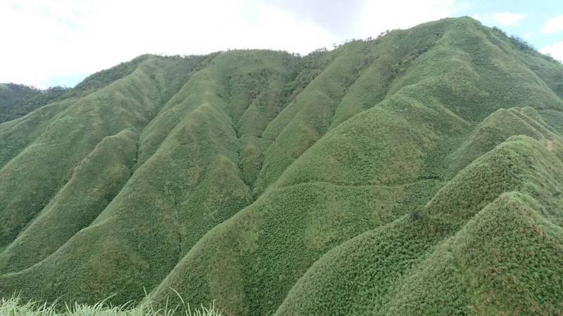 抹茶山步道目前尚未開放,圖為抹茶山。圖/羅東林管處提供
