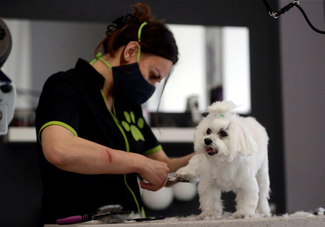 疫苗接種計畫順利開展,上班族回辦公室工作,不能再長時間陪伴家中寵物,對寵物照護行...