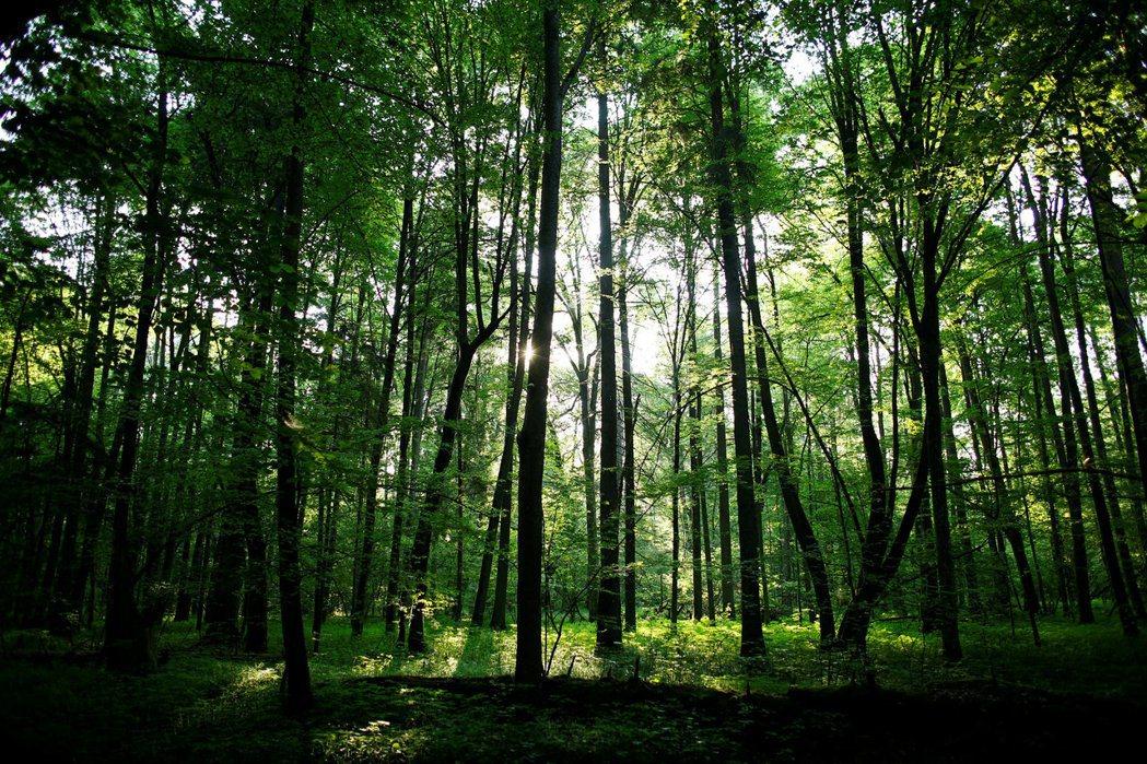 歐盟計劃種植30億棵樹,幫忙吸收更多二氣化碳,同時促進生物多樣化。(路透)