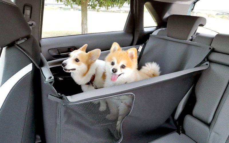 後座也有可以容納兩隻狗的寵物座椅。 摘自Honda