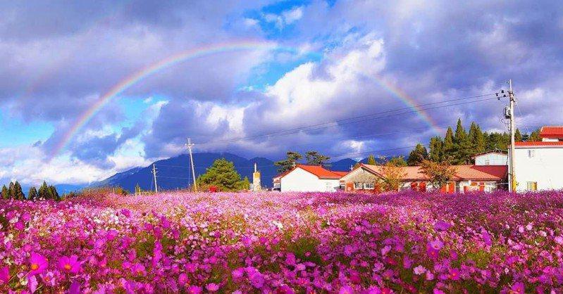 台中高山陣雨後的彩虹,令人驚艷。圖/福壽山農場提供