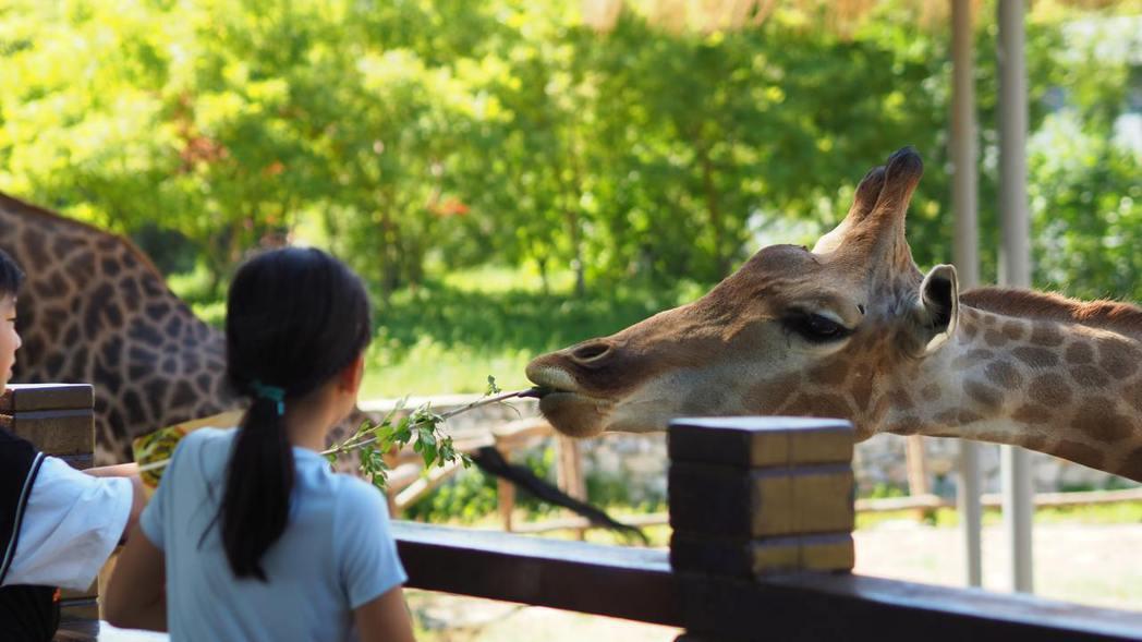 對於孩子們而言,動物園、生態公園是接受環境教育的良好場域。 圖/unsplash