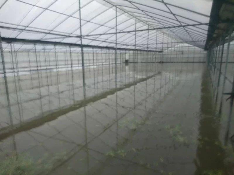 嘉義縣新港鄉昨天強降雨,古民村內溫室儘管密閉性高卻也難逃一劫,空心菜泡水,農民欲哭無淚。圖/蔡峻傑提供