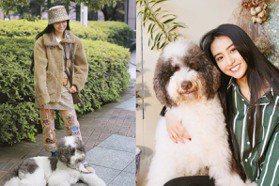 躺地上賣萌的巨星!木村光希帶愛犬一起拍廣告