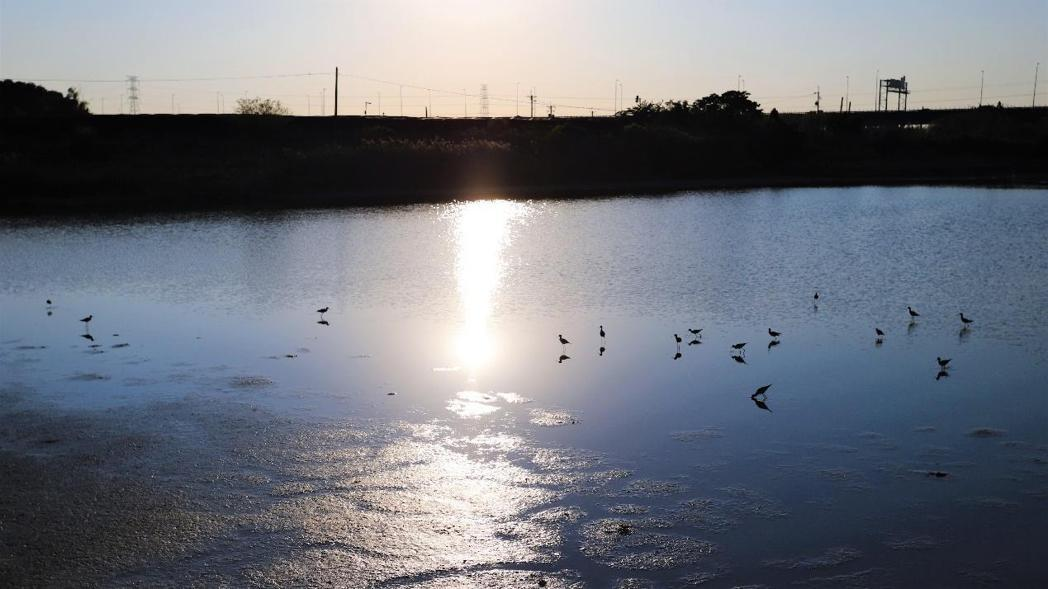 今年初水位持續下降,不過魚群和鳥類的活動仍然熱絡頻繁。 圖/作者自攝