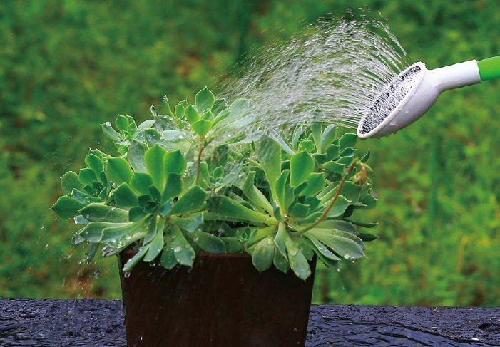 多肉植物生長期必須給予充足的水分。 圖/台灣廣廈授權使用