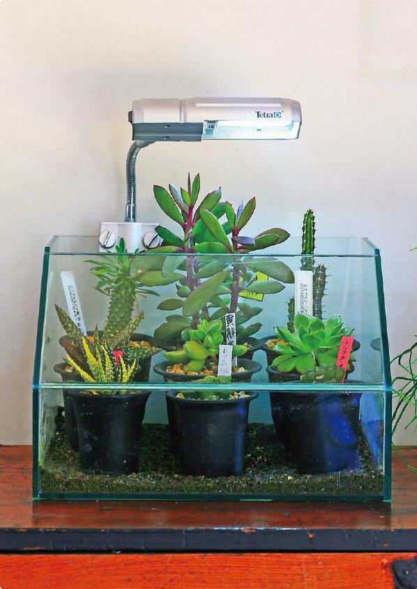 建議將植栽放在淋不到雨的屋簷下或陽台上,盆器要放在架上,不可以直接接觸地面。 ...