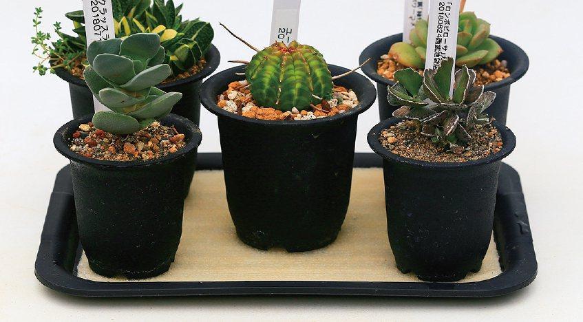 放盆栽的盤子鋪上不織布,是讓盆栽不缺水的小技巧。 圖/台灣廣廈授權使用