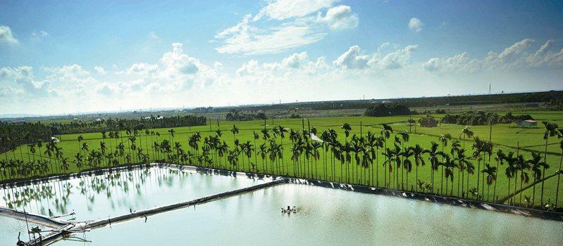 清朗的天候、綠油油的稻田以及隨風搖動羽狀複葉的檳榔 樹,興許構成了李香蘭對屏東的原初印象。 © 視覺中國