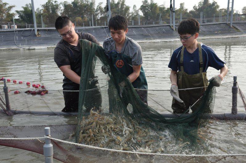 過去一直被認為冷門的「水產養殖」招生亮眼,許多科大的水產養殖系都是滿招,近幾年也吸引不少明星高中生就讀。圖/屏科大水產養殖系提供