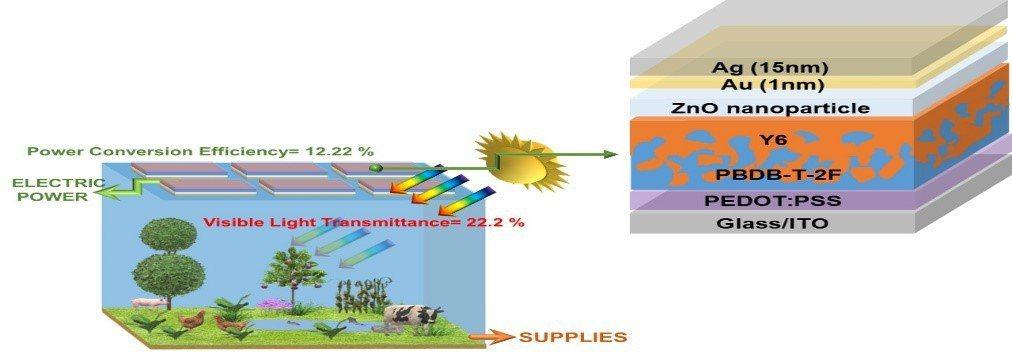 左圖為置於溫室屋頂半透明有機太陽能電池模組,右圖為元件結構包括ITO陽極,PED...