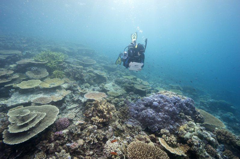大堡礁海洋公園管理局潛水員七月廿三日監測大堡礁狀況。(美聯社)