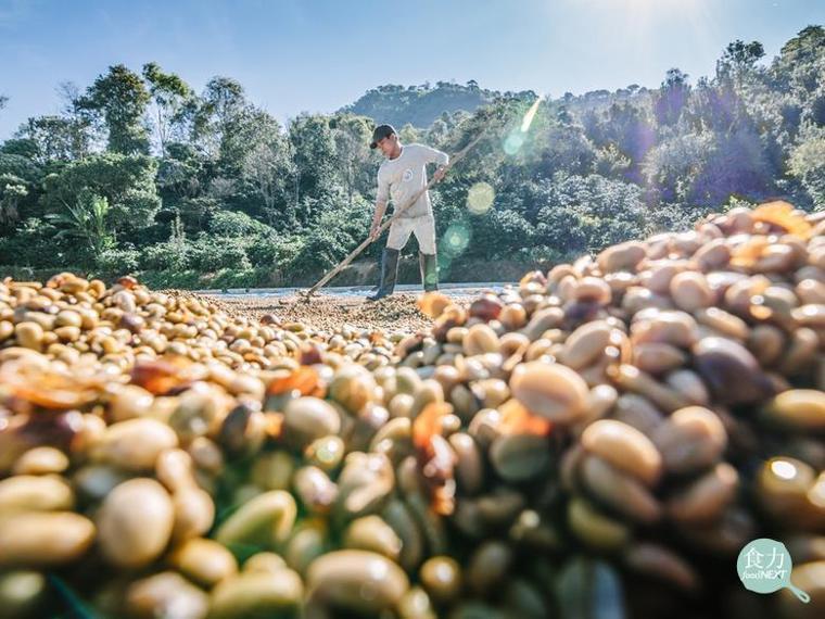 市面上常見的「日曬」、 「水洗」等處理法,是將咖啡果實(又稱咖啡櫻桃)去除所有外...