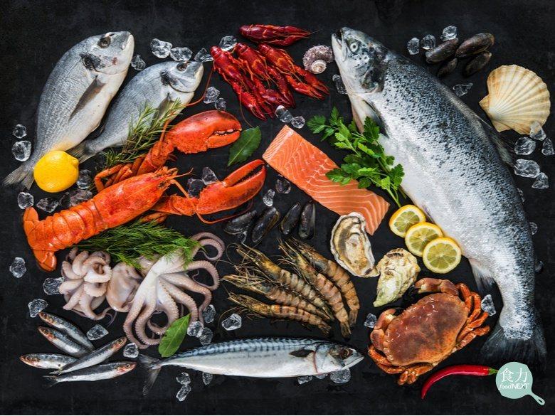 不斷上升的溫度,海洋生物也正面對生理結構的變異。 圖/食力資料照片