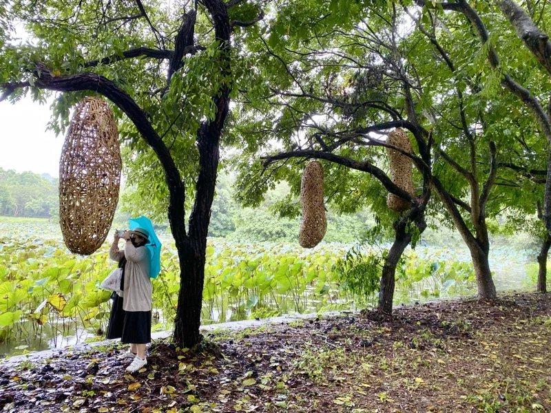 竹藝師徐暋盛作品《蛻變前的等待》藉由繭、蛹詮釋生命的寶貴與無窮力量。 圖/宋健生...