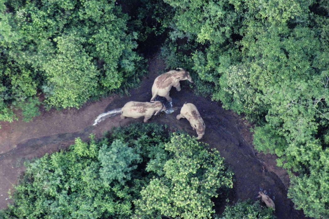 圖為7月時正在遷徙中的象群。 圖/法新社