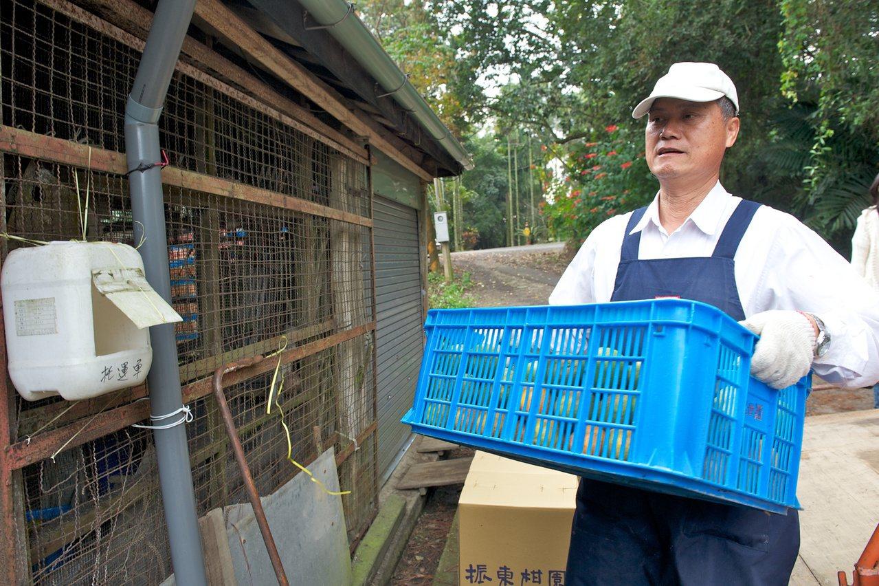 前台中縣農業局長趙令熙退休後,以自然農法經營自家果園,當起全職農夫。 圖/振東柑...
