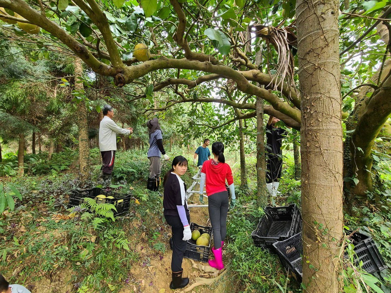 振東柑園貫徹自然農法,果園成了動物天堂,私校學生也來造訪體驗。 圖/振東果園提供