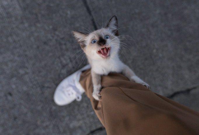 幼貓靠近一名攝影的男子,抱住他的小腿,不斷地喵喵叫,彷彿在叫他帶牠回家。圖取自推...