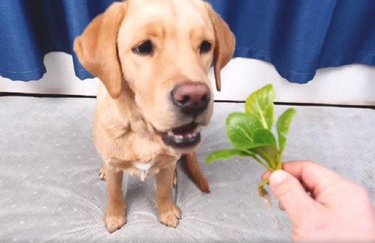 不需要刻意給狗狗餵蔬菜。圖取自FB