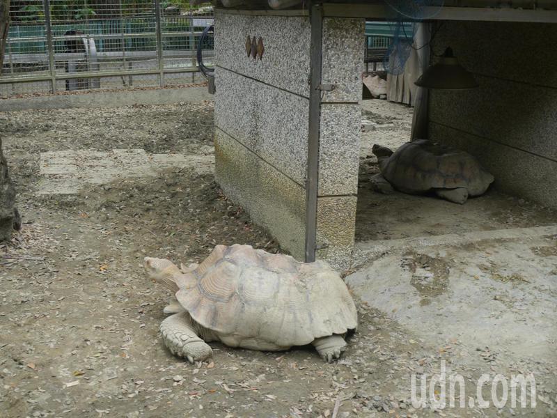 高雄壽山動物園動工改造,將斥資4.9億元改裝成全新風貌的動物園。記者徐白櫻/攝影