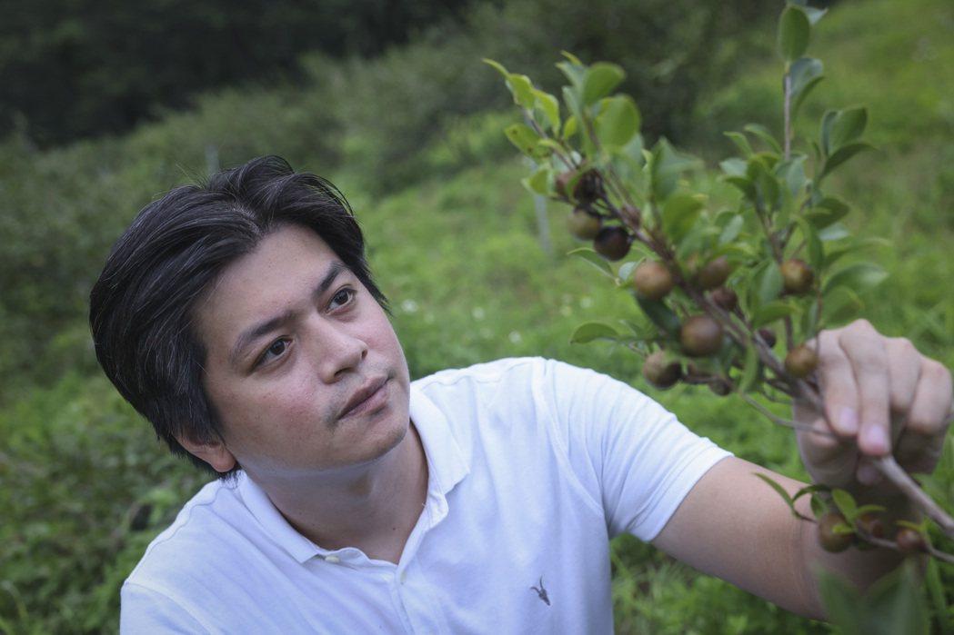 經過多年努力,趙文豪成功在花蓮崙山、宜蘭南澳和阿里山三區打造苦茶樹園。記者王聰賢...