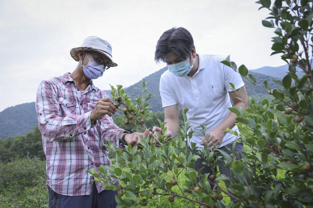 趙文豪(右)與農業規劃師討論苦茶園內的生長狀況。記者王聰賢/攝影