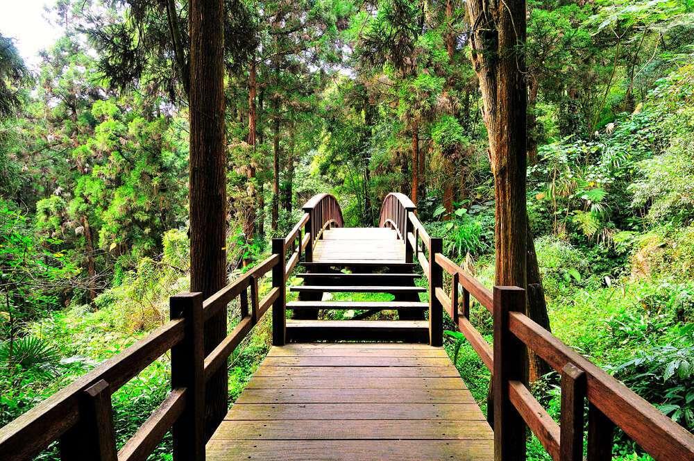 奮起湖北側步道往前走,就可以發現日本神社、悶柴窯等景點,漫步其中吸收芬多精,享受...