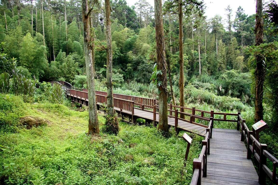 奮起湖南側步道鬱鬱蔥蔥、巨木巍峨,身處其中吸收芬多精的洗禮,令人心曠神怡。 圖/...