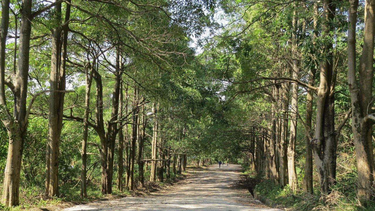 太平區咬人狗坑步道的中間點千坪嶺靜思林,場地寬闊,舊產業道路兩側植栽茂密、涼爽。...