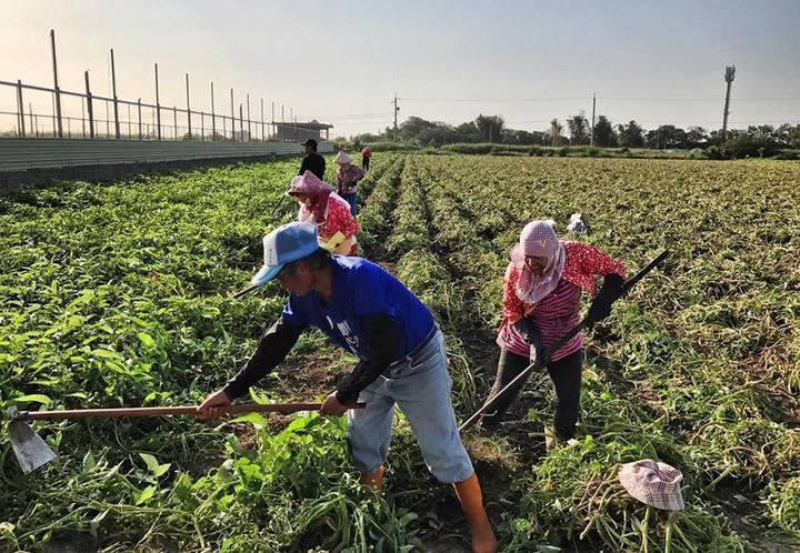 農藥購買實名制7月上路,但農藥行業者說,10個顧客有9個都沒帶證件,另外很多農民會請家人或工人來買農藥,身分查核很不容易。圖/聯合報系資料照片