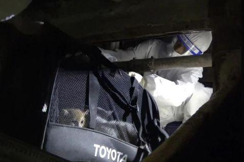 動物走私、防疫、安樂死:貓命之間的電車難題