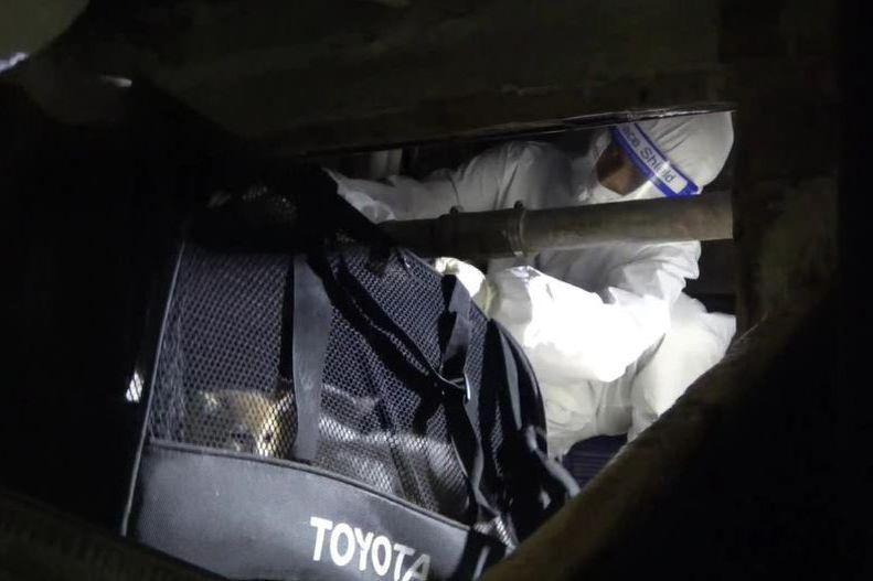 2021年8月21日,海巡署在台南查獲一艘內有許多名貴貓的走私漁船。依照現今檢疫規範,不得不安樂死銷毀。我想許多人的心一樣是痛的。圖為查緝人員在漁船密艙搜出袋袋的寵物貓。 圖/聯合報系資料照