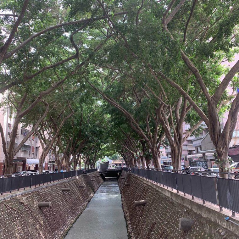張豐年住家週邊的垂榕隧道,經過多年已恢復成綠意蔥蔥的樣貌。這裡也是張豐年投身保護...