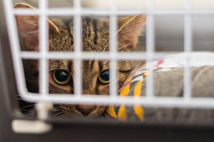 來源不明未經檢疫合格闖關的貓隻,引進狂犬病的風險極高,為了保護全國民眾及犬貓等動...