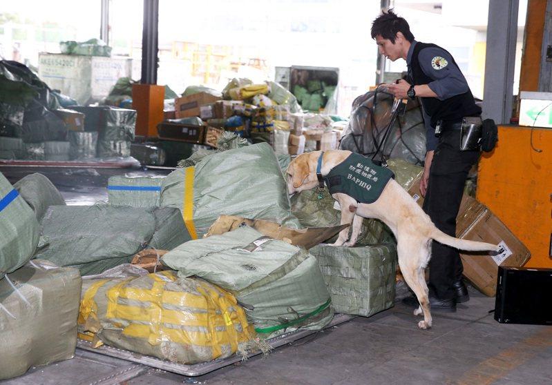 第一線海關人員透露,桃園機場「快遞貨」一天約20萬件,常是帆布袋、塑膠袋包一包就進來很雜亂,也增加查驗困難。圖為防檢局檢疫犬執行勤務情形。圖/聯合報系資料照片