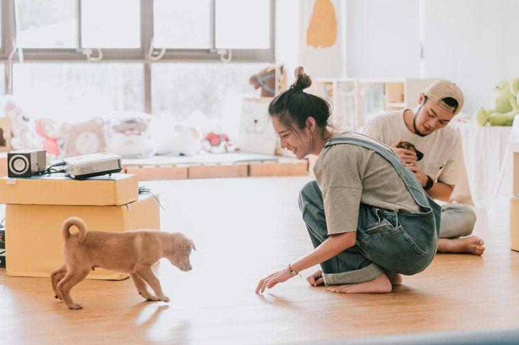 收容所打造明亮的空間、寬敞且乾淨的環境,提供認養人與流浪貓狗互動的舒適空間。 圖...