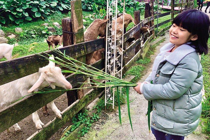 ▲近距離餵食可愛動物。  圖:台灣休閒農業發展協會/提供