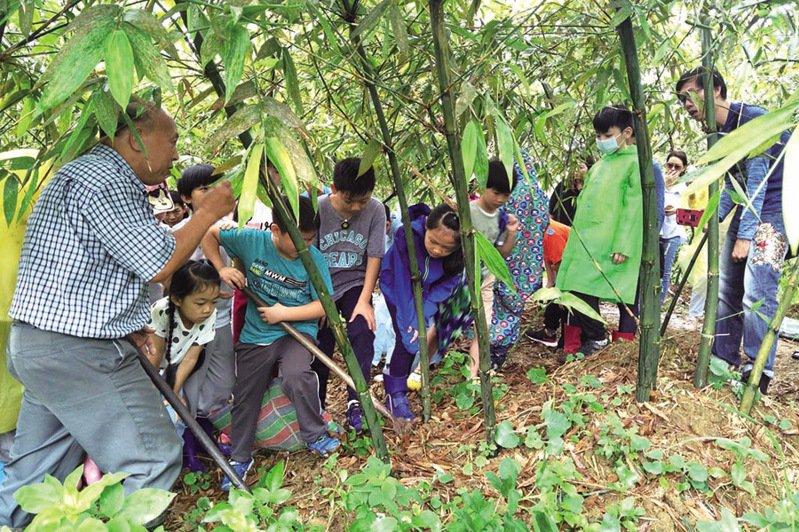 ▲進入竹林體驗挖竹筍。  圖:台灣休閒農業發展協會/提供