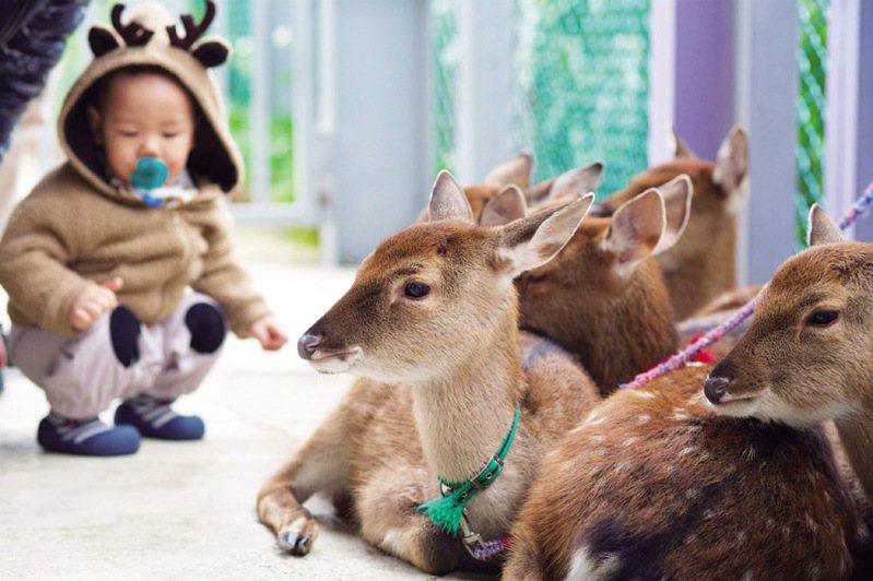 ▲跟溫馴的小鹿和影。  圖:台灣休閒農業發展協會/提供