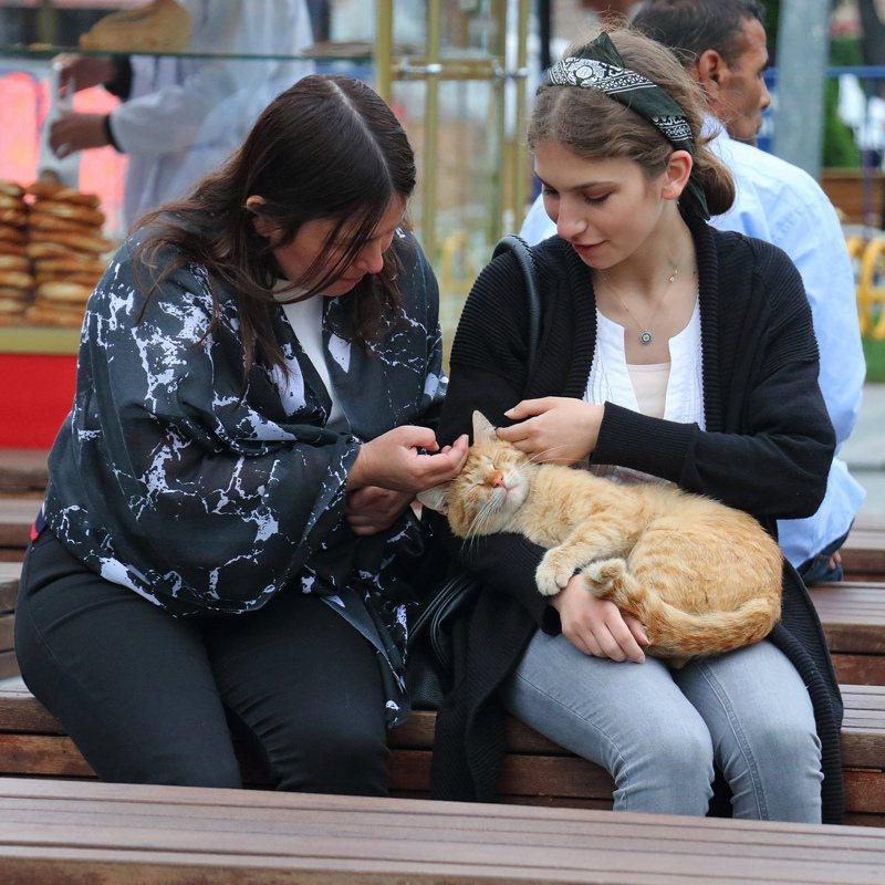 人人有貓抱。今日登場/吳毅平