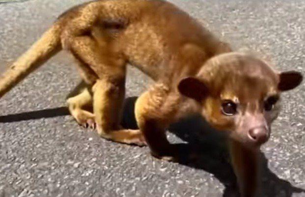 日本男子在山裡發現一隻長得像猴子的奇妙生物。圖取自youtube