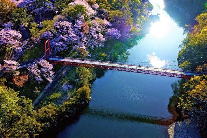 備受在地民眾喜愛的賞櫻名所「櫻淵公園」。 圖:愛知縣(東三河總局)/提供