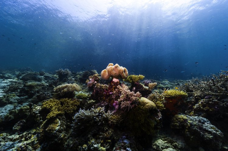 Landers Radiance作品設計靈感來自南非的蘭德斯礁。圖/DE BEE...