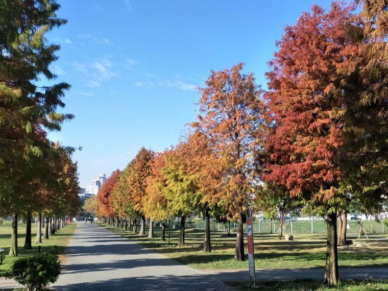 改變體質最好的方法是運動,公園裡的落羽松染上瑰麗的橙黃、豔紅,洗滌梳理身心,沉醉...