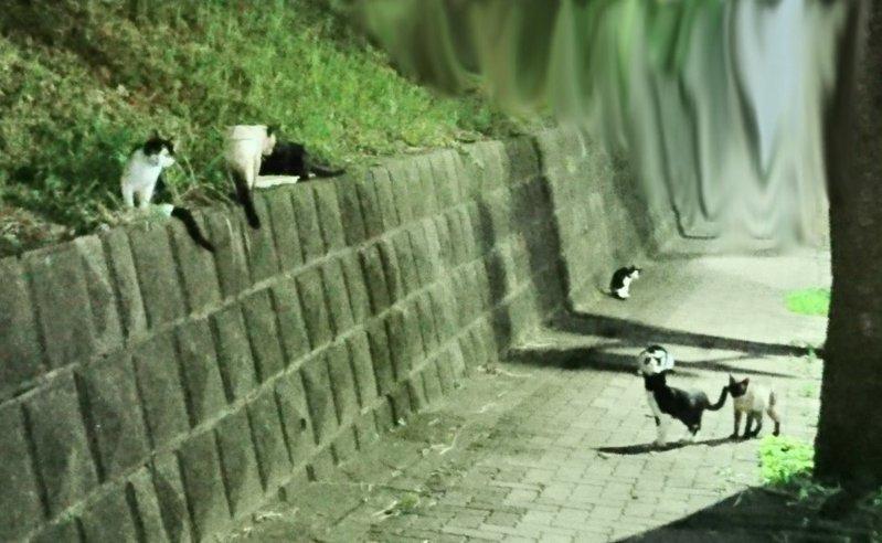 一位日本網友因為寵物貓走失,拜託附近的野貓尋找,沒想到過不久後真的找回失蹤的貓咪。圖擷取自twitter