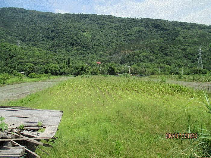 位於花蓮壽豐鄉的1500坪土地將於7日被法拍,底價為600萬元。圖/執行署花蓮分署提供