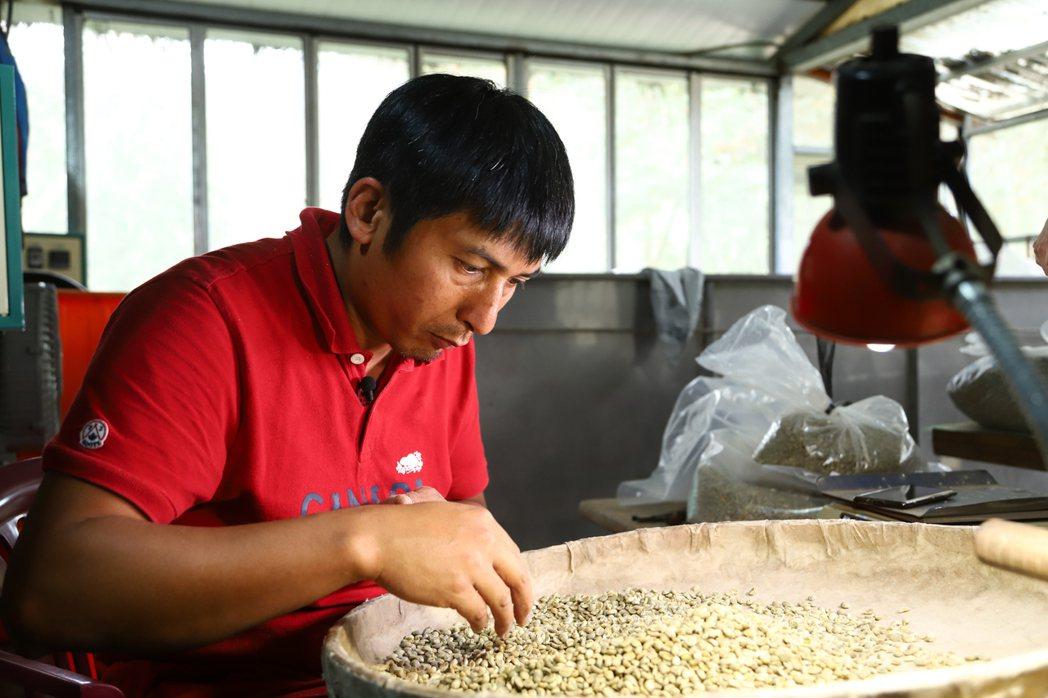 從種豆、挑豆到烘豆,方政倫慢慢摸索,打造出一條龍模式。報系資料照片