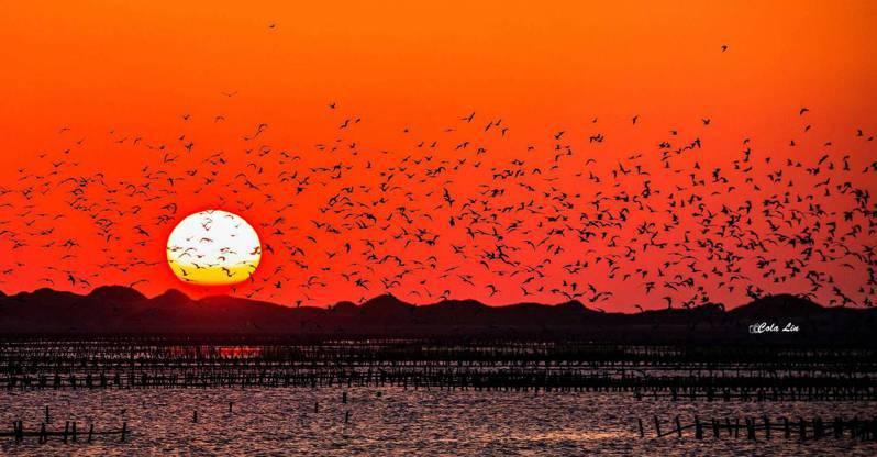 台南市北門發展出關水耕作方式,是候鳥美地。圖/林可樂提供