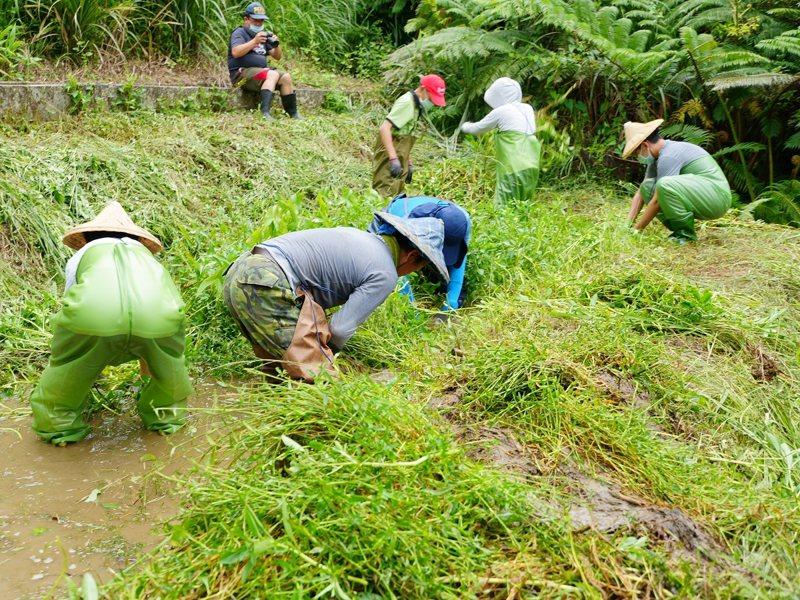 台灣原生魚類保育協會邀請楊梅高中的學生來進行棲地維護,讓原生魚的生存環境不受強勢植物的威脅。 圖/紅樹林有線電視提供